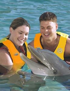 hawaii_swim_with_dolphins_2