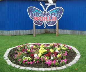 Next stop? Butterfly World!