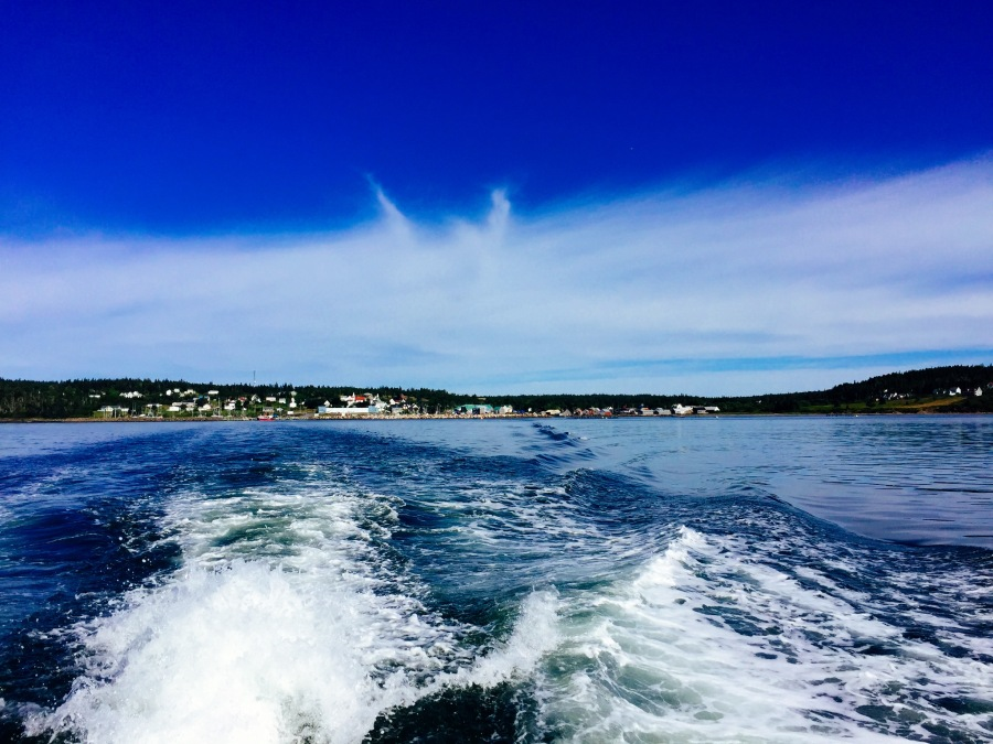 The view from the back of the boat. It was a beautiful day for whale watching!