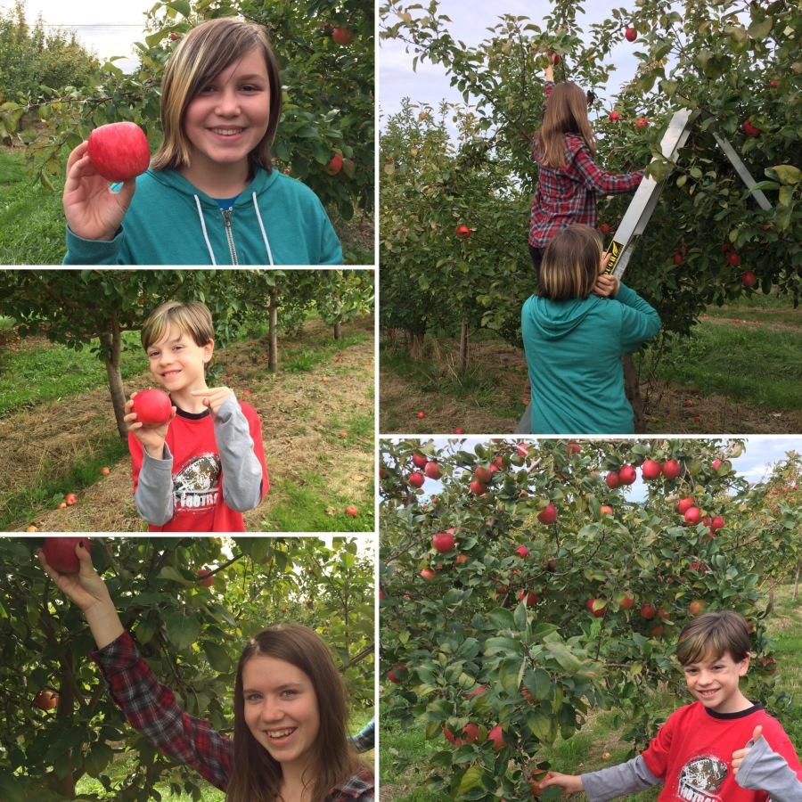 The kids were even able to grab a small ladder and pick from the top of some of the trees, which is where the best apples were located. They each got to pick apples on their own and everybody got their turn climbing the ladder. We definitely had some happy campers on this day.